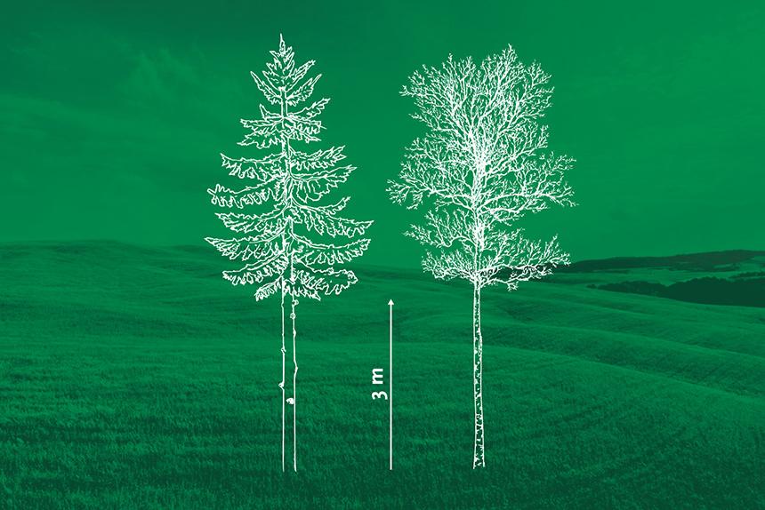 Kasvavate puude laasimine. Metsaühistu